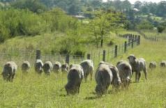 Vidya's sheep (10)